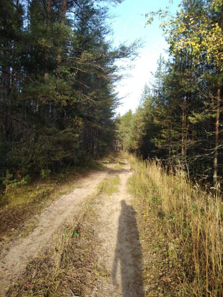 Осенний лес преподносит свое настроение и его дары для нас 01