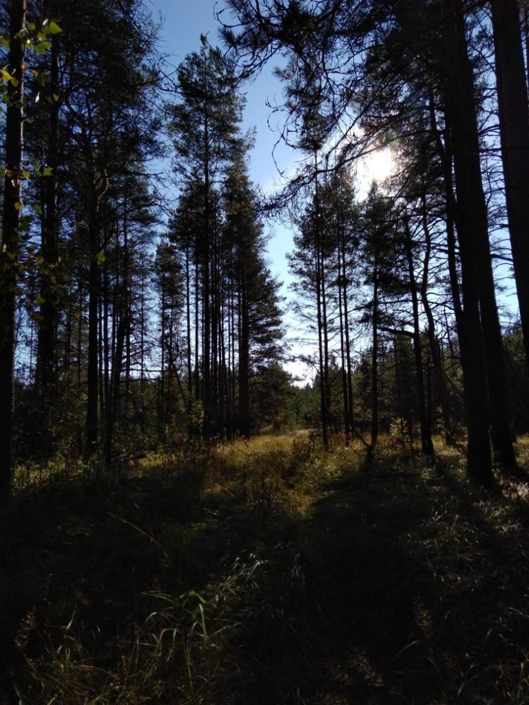 Осенний лес преподносит свое настроение и его дары для нас 04