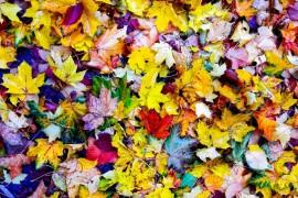 Осенняя прогулка по городу Меленки