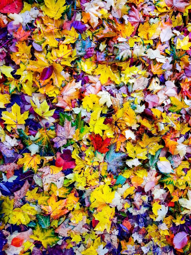 Осенняя прогулка по городу Меленки 01