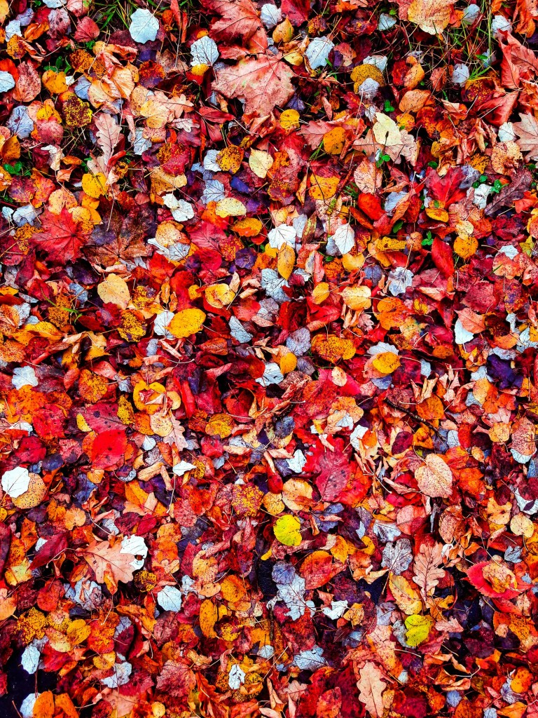 Осенняя прогулка по городу Меленки 02