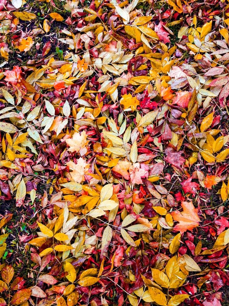Осенняя прогулка по городу Меленки 03