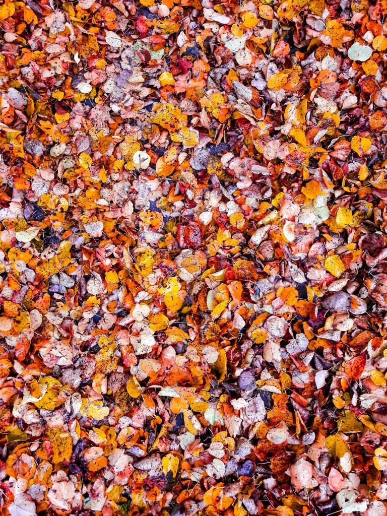 Осенняя прогулка по городу Меленки 04