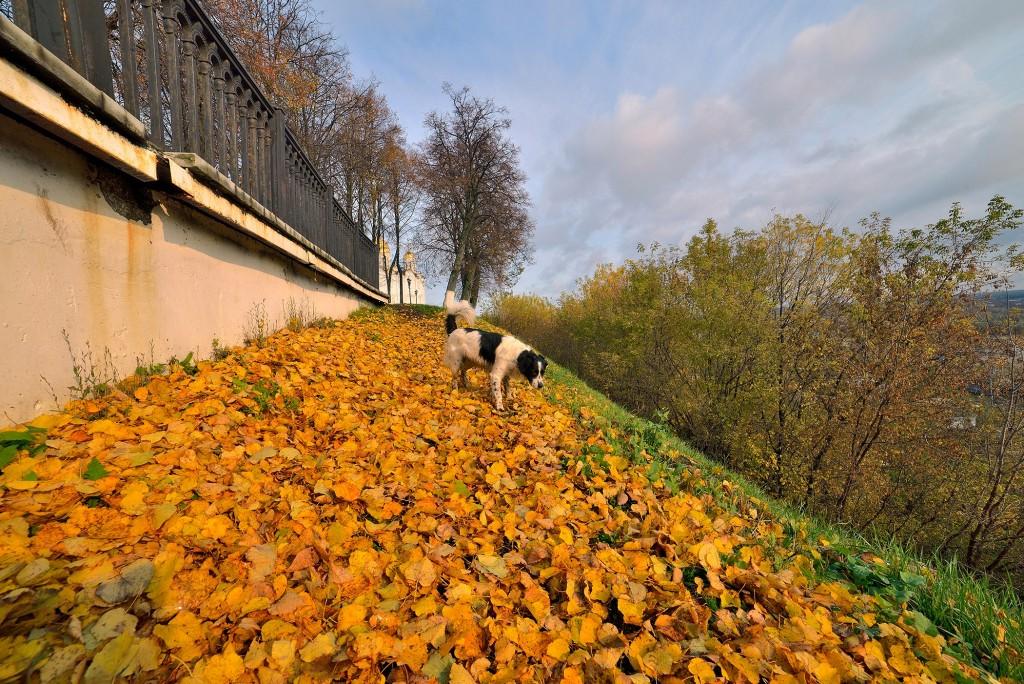 Осень во Владимире, или в одном шаге от зимы - II 05
