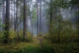 Осень в Серковских лесах