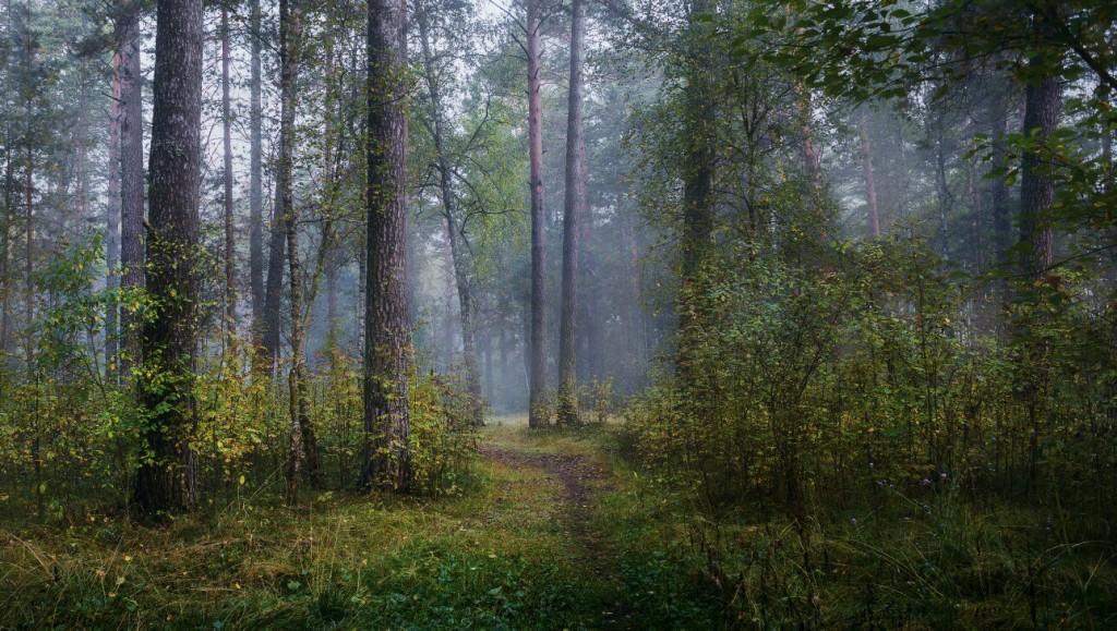 Осень в Серковских лесах 01