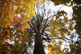 Осень на Вербовском