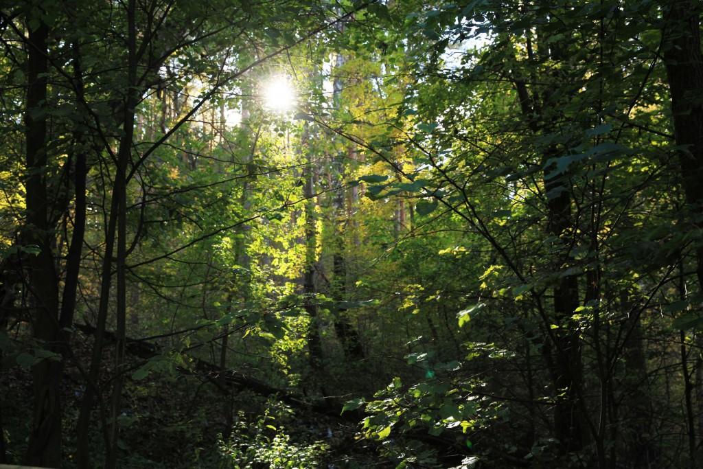 Осень на Вербовском 03