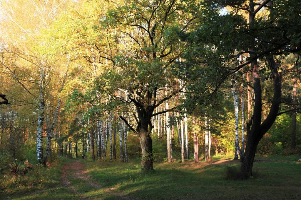 Осень на Вербовском 04