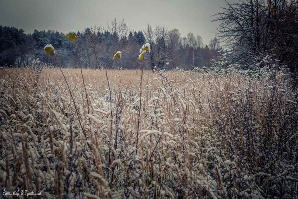 Первый снег в муромском городском парке 02