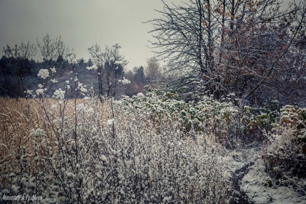 Первый снег в муромском городском парке 04