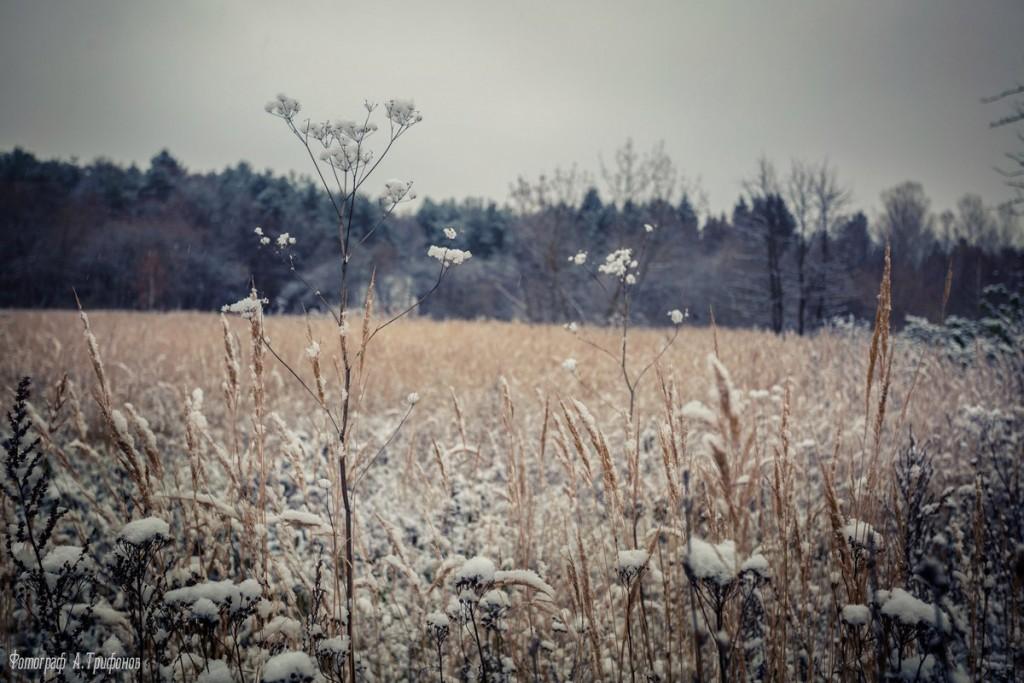 Первый снег в муромском городском парке 07