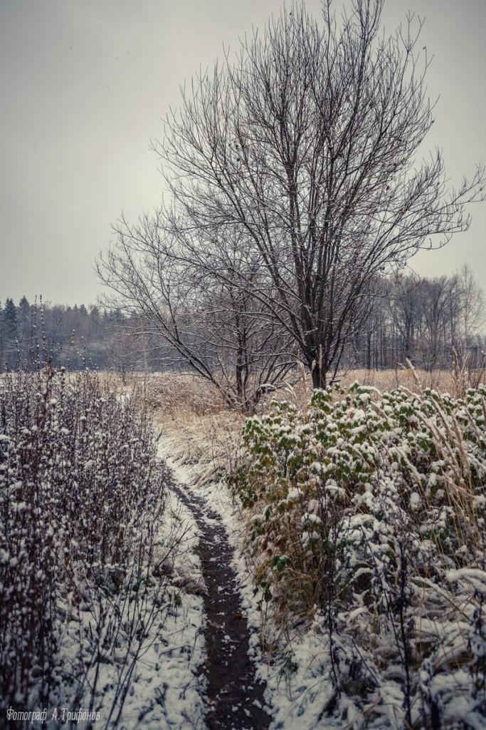 Первый снег в муромском городском парке 08