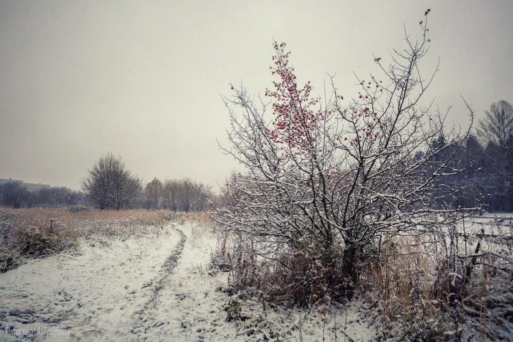 Первый снег в муромском городском парке 09