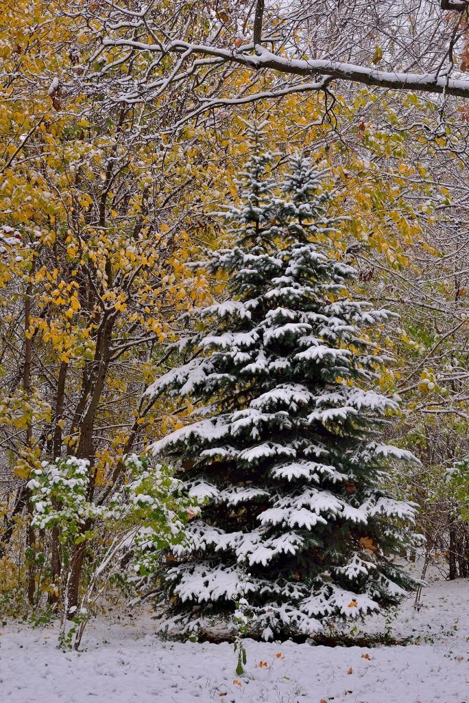 Проверка зимой во Владимире - продолжение... ( конец октября ) 02