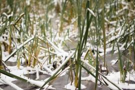 Снежная осень в Вязниках