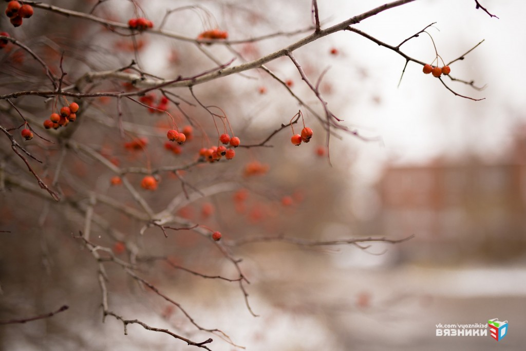 Снежная осень в Вязниках 05