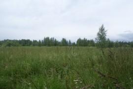 Вспоминая Лето, поле близ Деревни Налескино