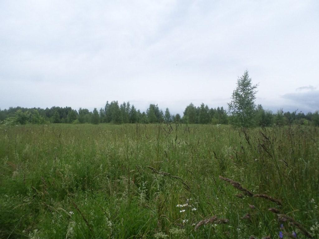 Вспоминая Лето, поле близ Деревни Налескино 01