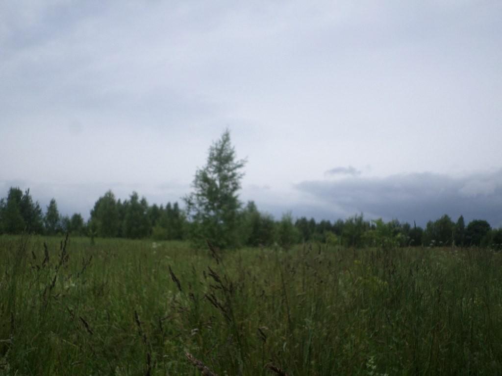 Вспоминая Лето, поле близ Деревни Налескино 02