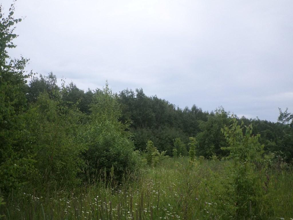 Вспоминая Лето, поле близ Деревни Налескино 03