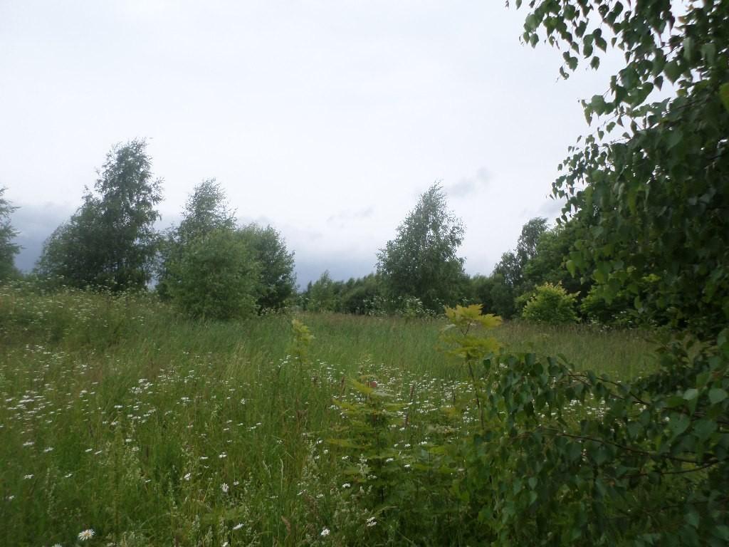 Вспоминая Лето, поле близ Деревни Налескино 04