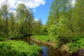 Камешковский район в конце мая