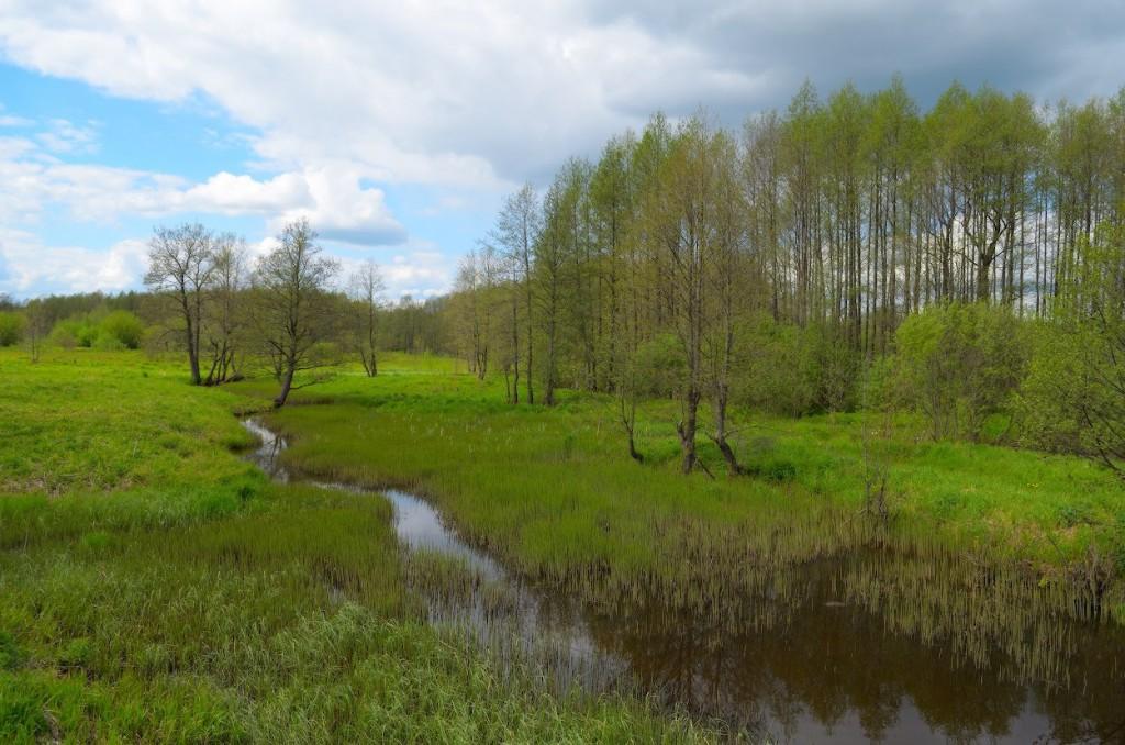 Камешковский район в конце мая 05