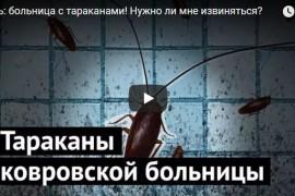 Жуть: ковровская больница с тараканами!
