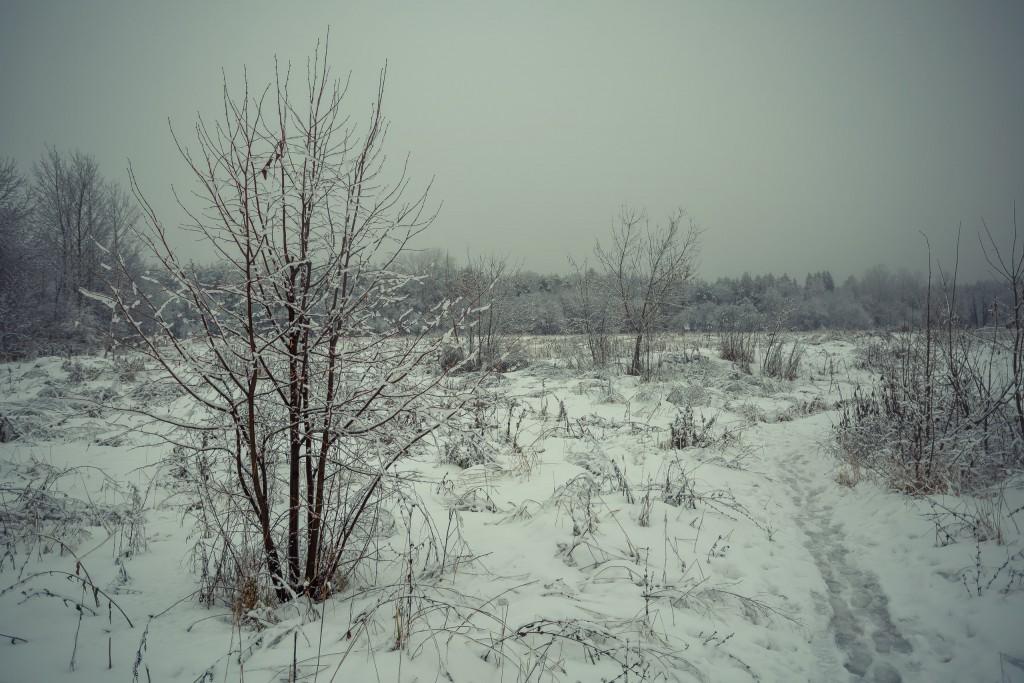 Зима в парке, Муром 03