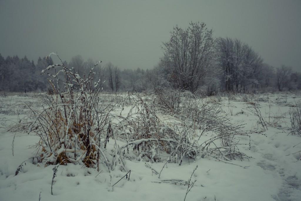 Зима в парке, Муром 05