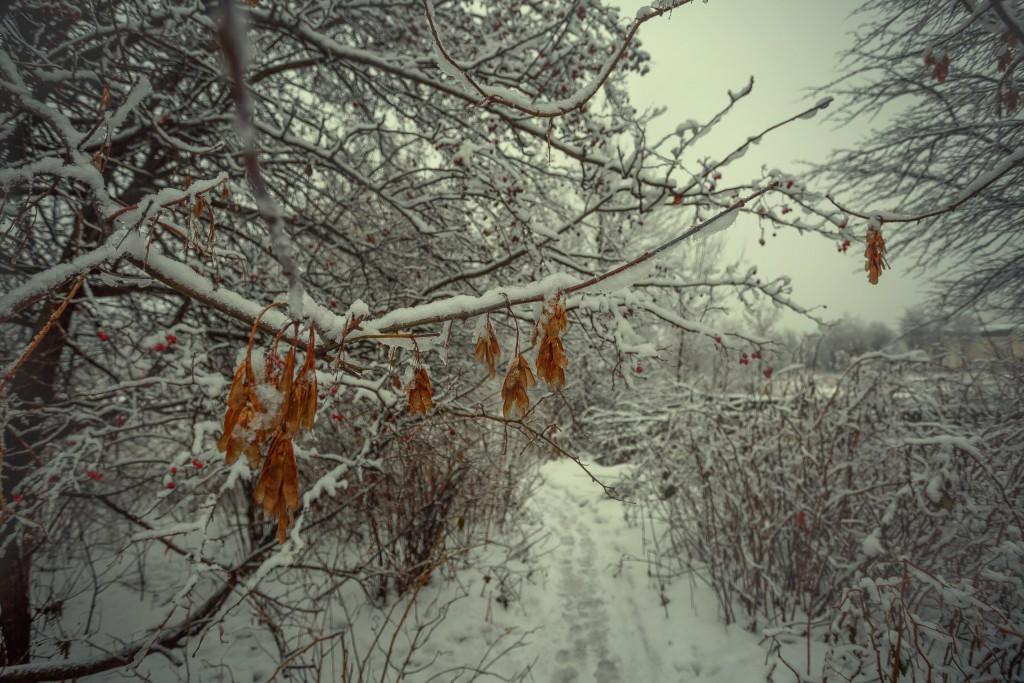 Зима в парке, Муром 07