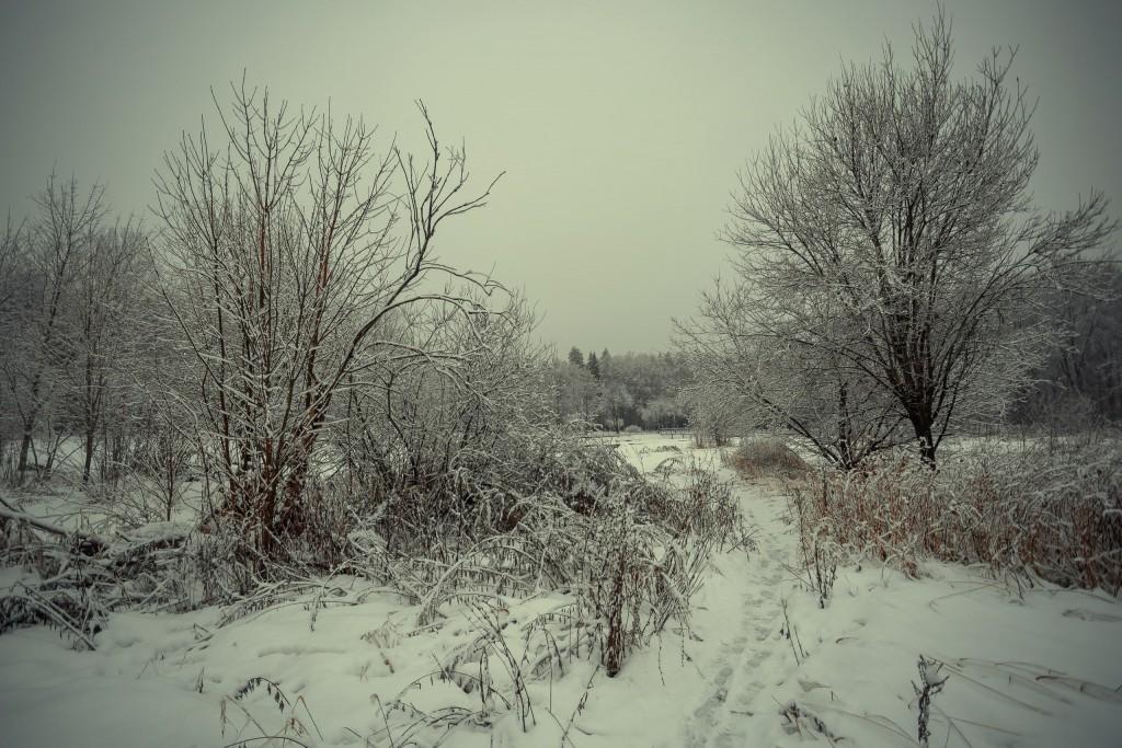 Зима в парке, Муром 08