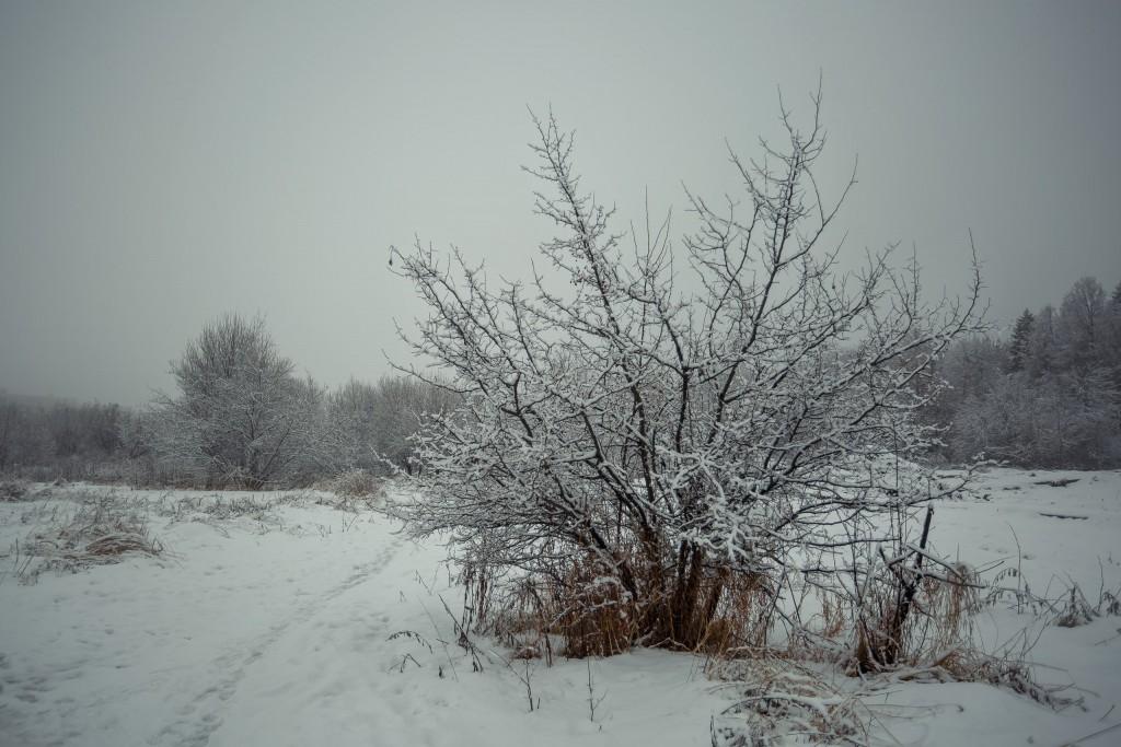 Зима в парке, Муром 09