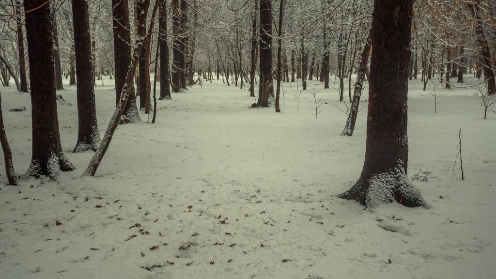Зима в парке, Муром 10