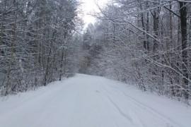 Муром снегом замело. Прогулка по снежному лесу на Вербовском (22.12.2017)