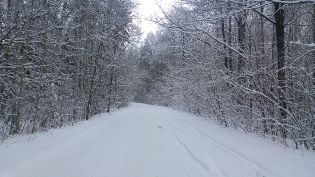 Муром снегом замело. Прогулка по снежному лесу на Вербовском. 01