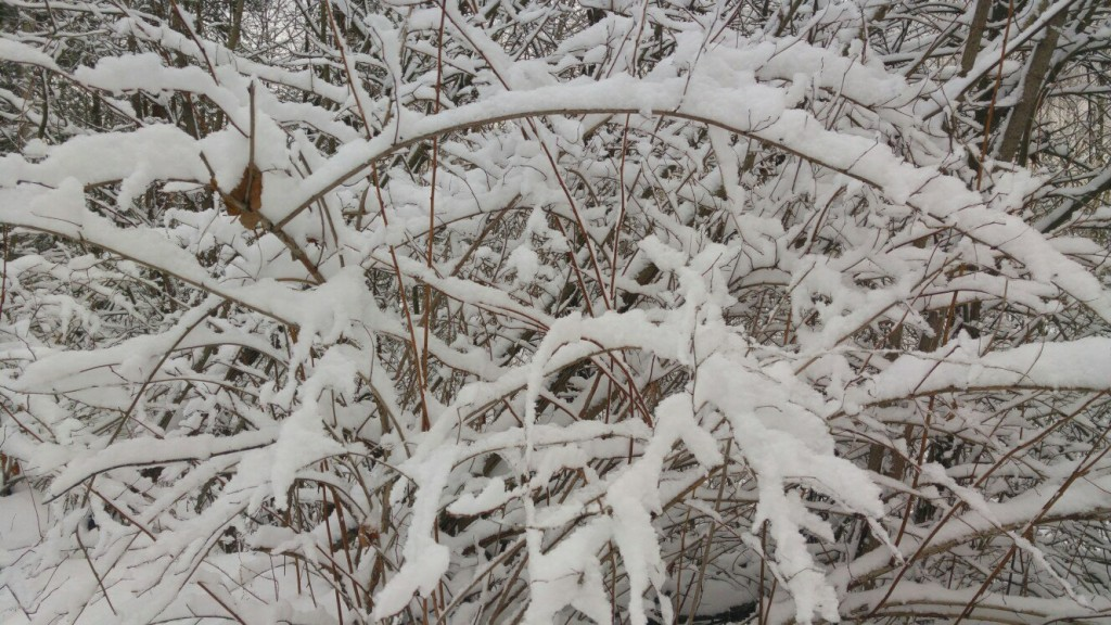 Муром снегом замело. Прогулка по снежному лесу на Вербовском. 02