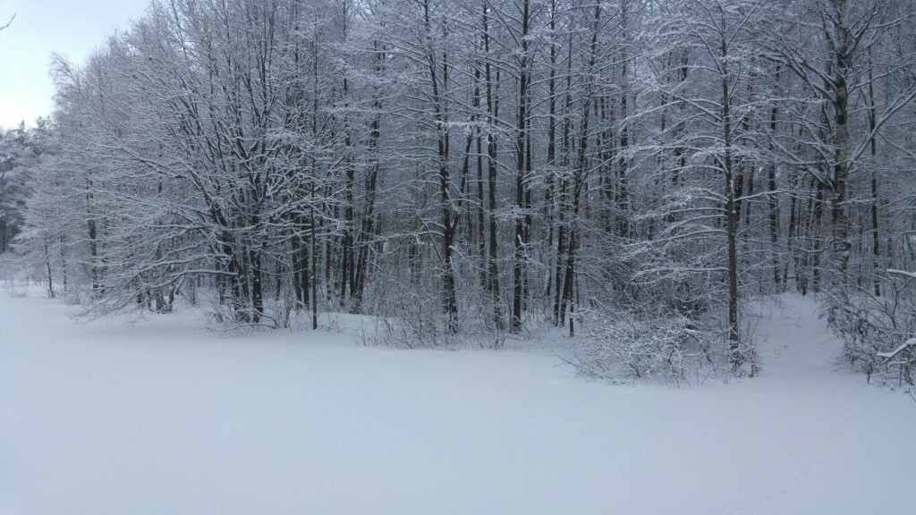 Муром снегом замело. Прогулка по снежному лесу на Вербовском. 04