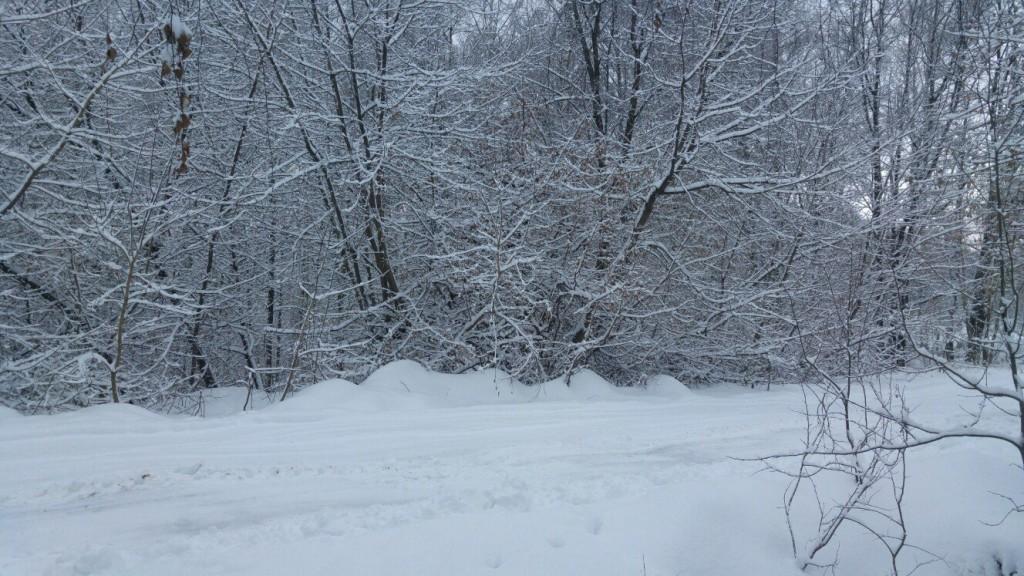 Муром снегом замело. Прогулка по снежному лесу на Вербовском. 05