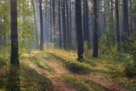 Осень в Вязниковском лесу