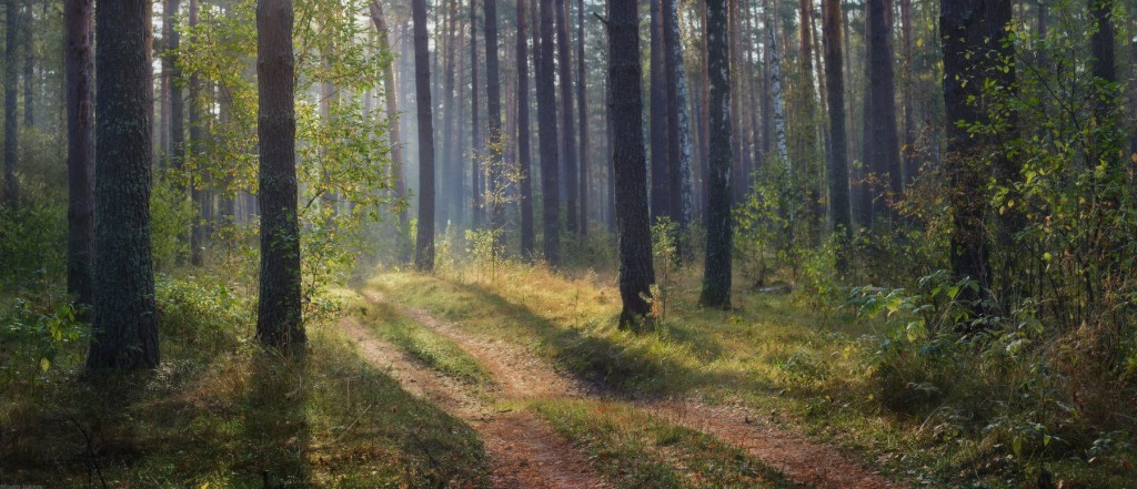 Осень в Вязниковском лесу 01