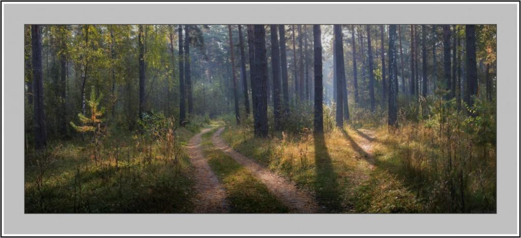 Осень в Вязниковском лесу 02