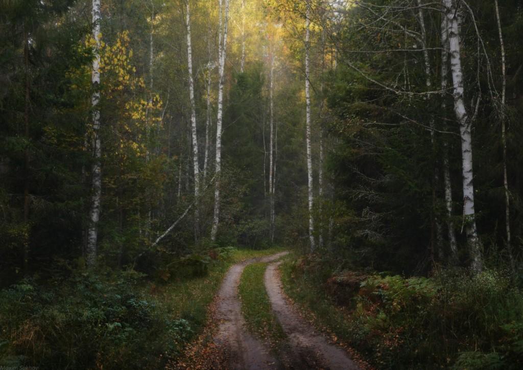 Осень в Вязниковском лесу 03