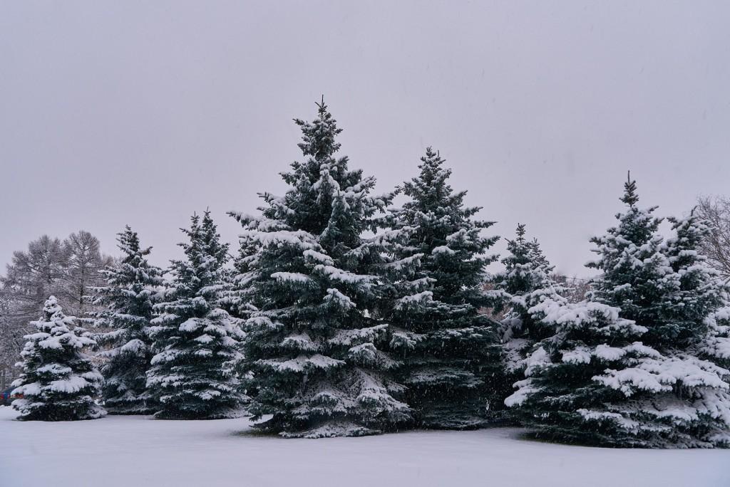 Первые дни зимы во Владимире 05