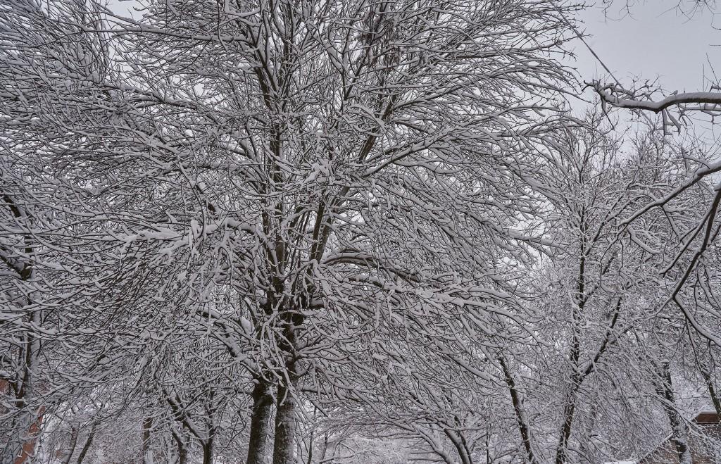 Первые дни зимы во Владимире 10