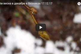 Почти весна в декабре в Вязниках 17.12.17