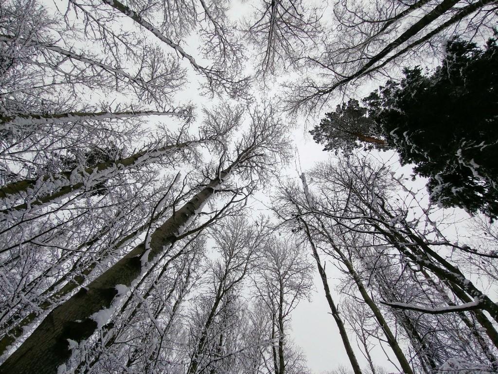 Снежных всем прогулок! 03