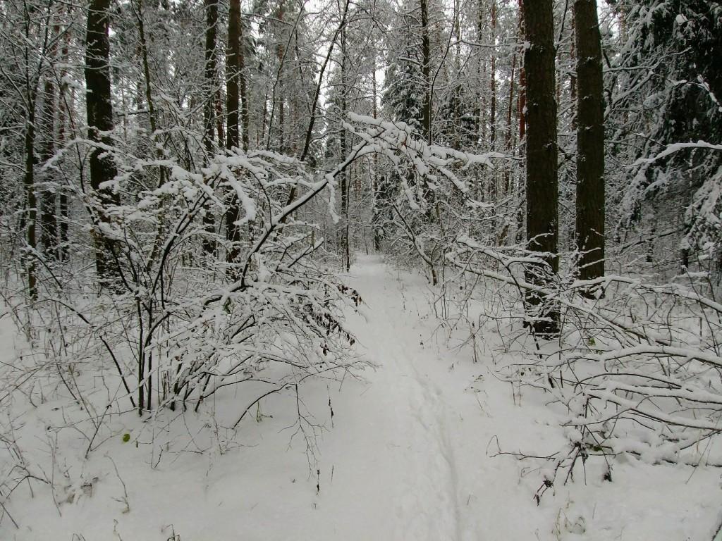 Снежных всем прогулок! 04