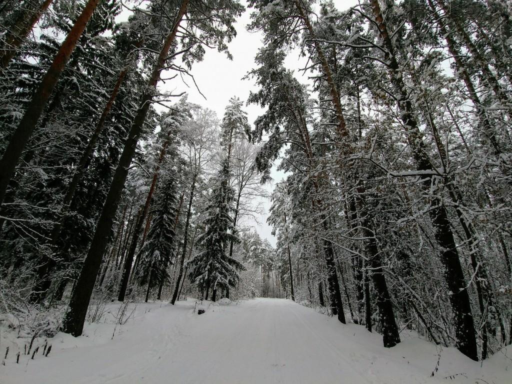 Снежных всем прогулок! 05